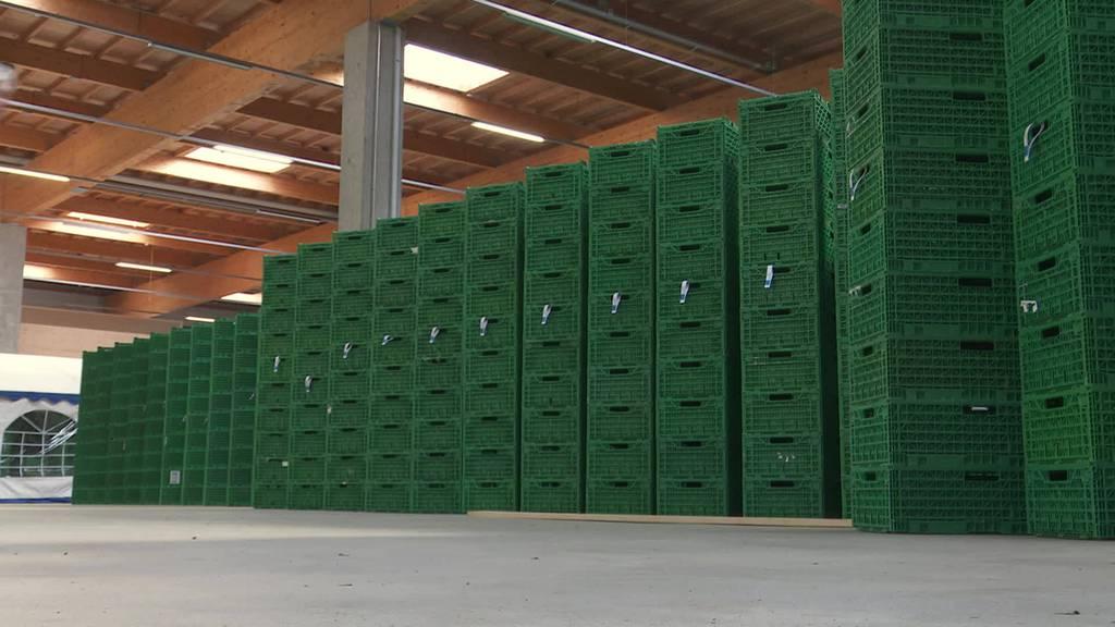 CBD-Verbot: Ostschweizer Hanf-Produzenten verunsichert