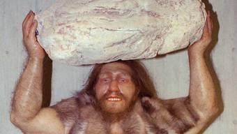 Modell eines Neandertaler-Menschen in einem deutschen Museum. Basler Forscher fanden heraus, dass er doch nicht nur plump Steine heben konnte.