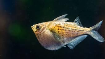 Fliegende Fische im Basler Zolli