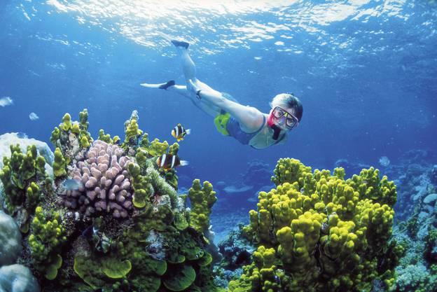 Viele erkunden das Reef mit dem Schnorchel