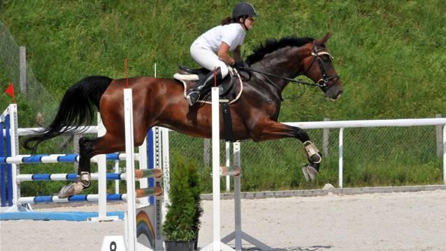 Möhlin hat ein Herz für Pferde: Gemeindeversammlung genehmigt Spezialzonen Reitsport. – Symbolfoto: pd