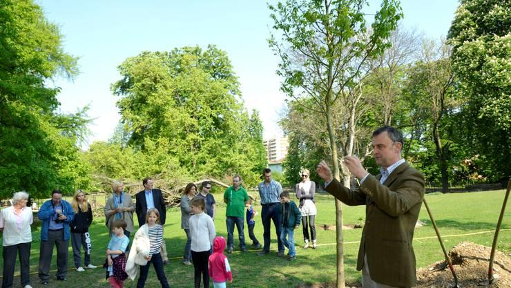 Der Leiter der Stadtgärtnerei, Emanuel Trueb, präsentiert den Besuchern die drei Trauben-Eichen.