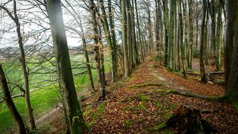 Der Wall zieht sich im hinteren Teil als auffälliges Erderhebung mitten durch den Wald.