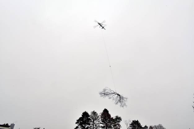 Bei der Glatzfelder-Villa und in deren Nachbarschaft wurden 14 Bäume mit einem Helikopter entfernt.