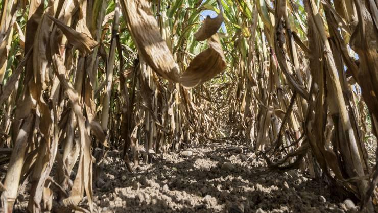 Der heisse und trockene Sommerhat in der Landwirtschaft Spuren hinterlassen.