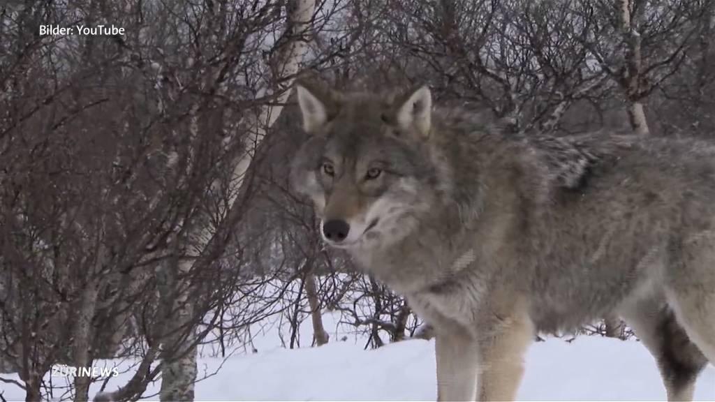 Referendum gegen neues Jagdgesetz lanciert