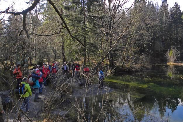 Felsen, Seen, Urwald