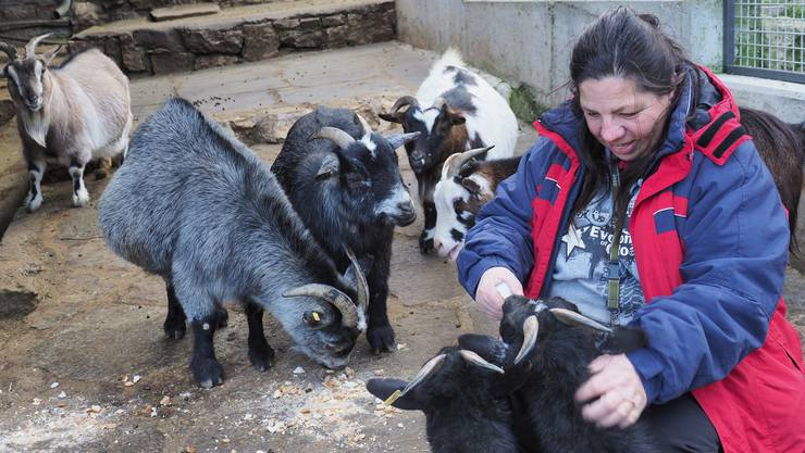 Tierpflegerin Beatrice Spielmann füttert die Zwergziegen.
