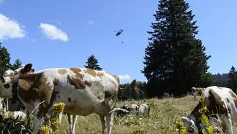 Wegen des trockenen Wetters mussten Kühe auf Westschweizer Alpen per Helikopter mit Wasser versorgt werden. (Archiv)