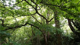 Das neue Forstgebiet hat derzeit eine Gesamtfläche von rund 21 Quadratkilometern.