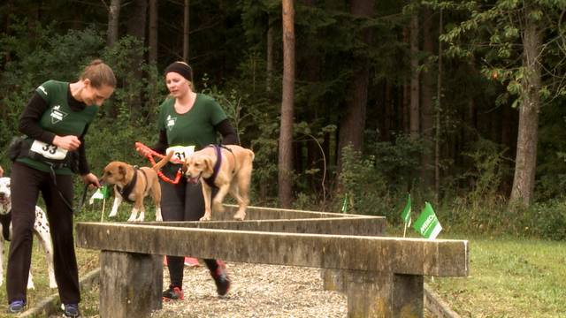 """""""Tough Dogz Run"""" / Wenn's juckt und brennt"""