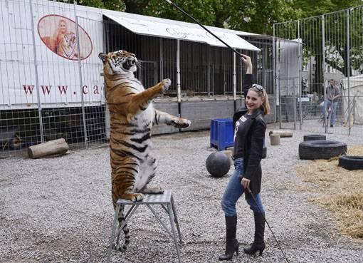 Tigerdomteurin Carmen Zander trainiert mit der Tigerdame Aschanti.
