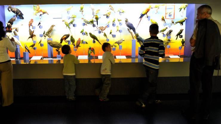 Eltern und Kinder entdecken das Naturhistorische Museum in Genf. Mit 15 Millionen Exemplaren zählt es schweizweit die grösste Sammlung dieser Art. (Archivbild)
