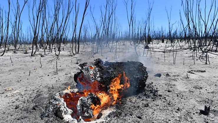 Verbrannte Erde in dem bisher bei Touristen beliebten Flinders Chase National Park auf Kangaroo Island in Australien. (Archivbild)