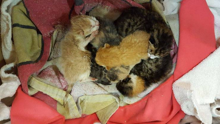 Sechs Kätzchen waren in einem Karton ausgesetzt worden.