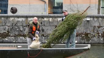 Solothurner Fischereiverein versenkt Tannli in der Aare