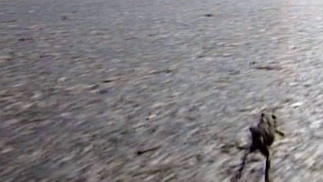 Nichts geht mehr auf der Autobahn wegen den wandernden Fröschen
