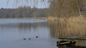 Blick auf den Burgäschisee: Am Samstag sollen möglichst viele für den guten Zweck in den See springen.