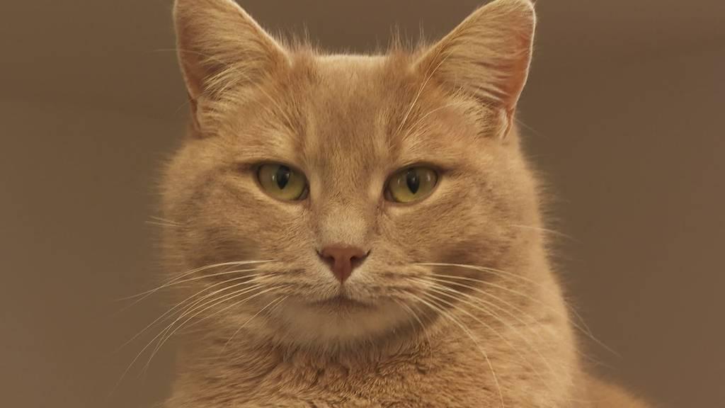 Überlebenskampf: Tierpension hat wegen Corona kaum Tiere