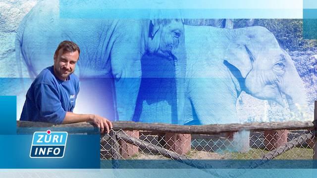 Omysha gewöhnt sich an Zoo-Pfleger / Rebbauern retten ihre Ernte