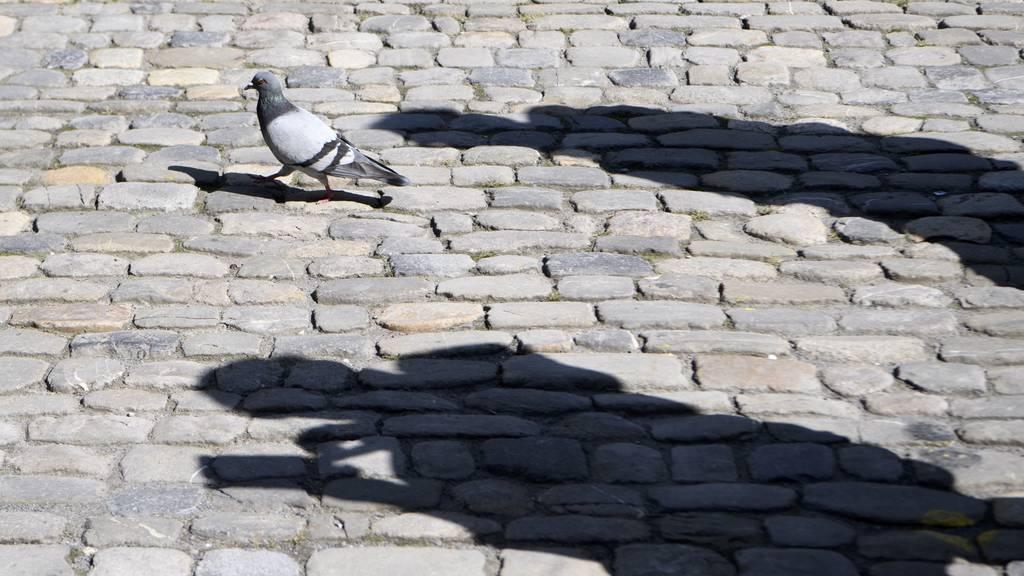 Bern zählt wieder seine Tauben