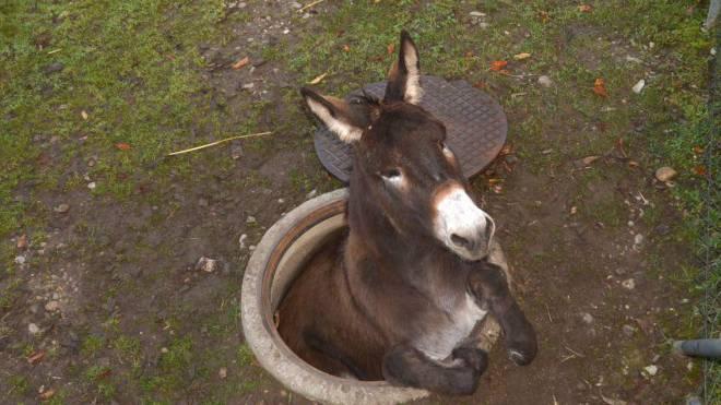 Das Unglück des Esels Nilo ging von Pratteln um die Welt. Foto: Polizei BL