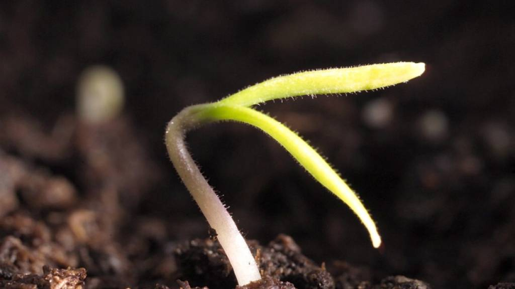 Wie Pflanzen ihre Energiemaschinerie in Windeseile in Gang setzen