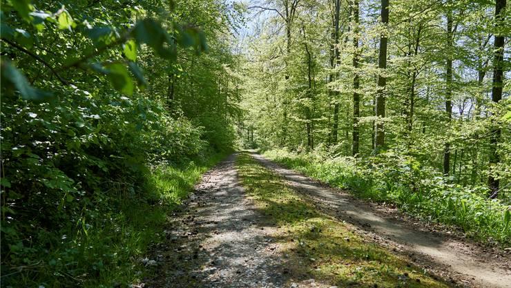 Von der richtigen Balance der Waldnutzung hängt ab, wie gross der permanente Beitrag des Waldes zum Kohlendioxid ist.