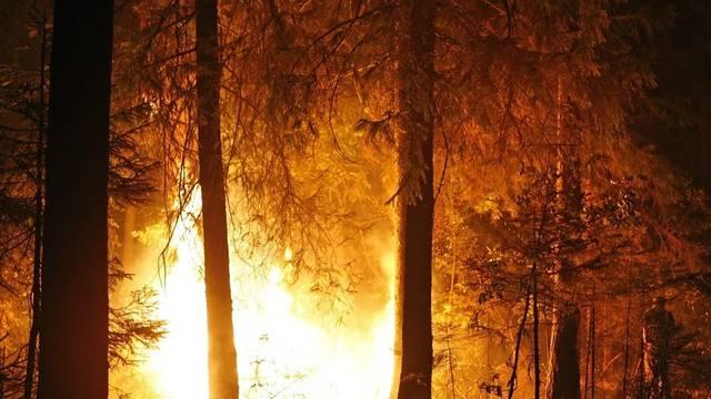 Bereits vergangenen Sommer hatte Russland mit verheerenden Waldbränden zu kämpfen (Archiv)