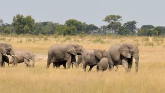 Eine Elefantenherde im Hwange-Nationalpark in Simbabwe. (Archiv)