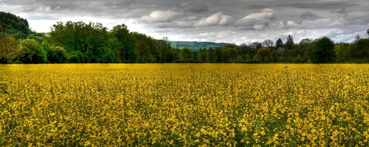 Für die besten Fotos reist Martin Gessler im ganzen Kanton Aargau herum: Frühling im Aargau.