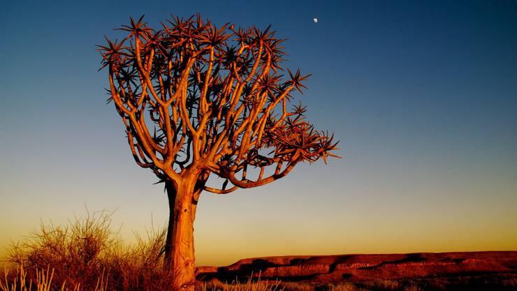 Spektakuläre Sonnenuntergänge, eine atemberaubend schöne Natur und das Wechselspiel zwischen Wüste und fruchtbarem Land - das ist Namibia. (Bild: Nicole Annette Müller)