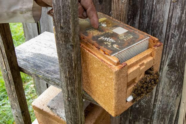 Sieben solcher Kästen, in denen jeweils ein Bienenvolk lebt, hat Remy Horisberger abzugeben.