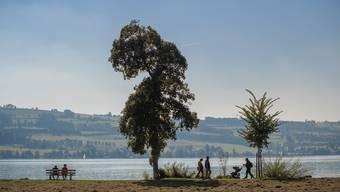 Szene vom Ufer des Sempacherssees am vergangenen Dienstag. Auch heute war das Wetter nördlich der Alpen nochmals äusserst mild.