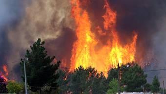 Die jüngsten Waldbrände in Portugal haben 70 Quadratkilometer Gehölz zerstört. Die Flammen waren am Montag zu 90 Prozent unter Kontrolle.