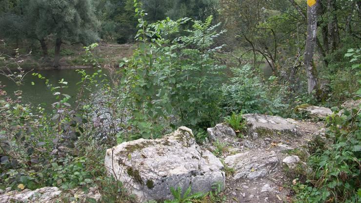 Der historische Damm in Rupperswil muss dem Auenschutzpark weichen (me)