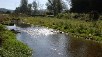 Revitalisierung der Reppisch bei Birmensdorf: Die beiden neuen Amphibienteiche an der Reppisch stehen kurz vor der Fertigstellung.
