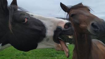 Los küss mich! 2 Pferde auf einer Wiese