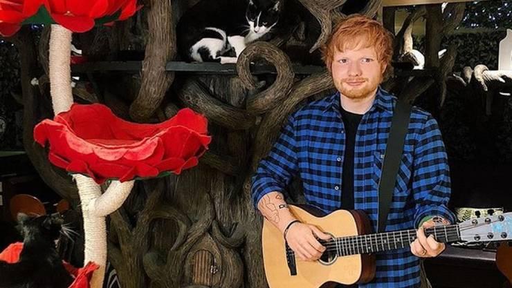 Katzen sind von Ed Sheeran gänzlich unbeeindruckt - vielleicht weil er keinen Ton rausbringt, da er aus Wachs ist. (zVg)