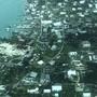 Das Rote Kreuz schätzt die Zahl der zerstörten Häuser auf den Bahamas auf mindestens 13'000. (Medic Corps via AP)