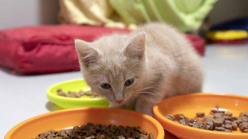 Krank oder verunfallt? Die Axa will künftig auch Katzen, Hunde, Schafe und andere Tiere versichern. (Symbolbild)