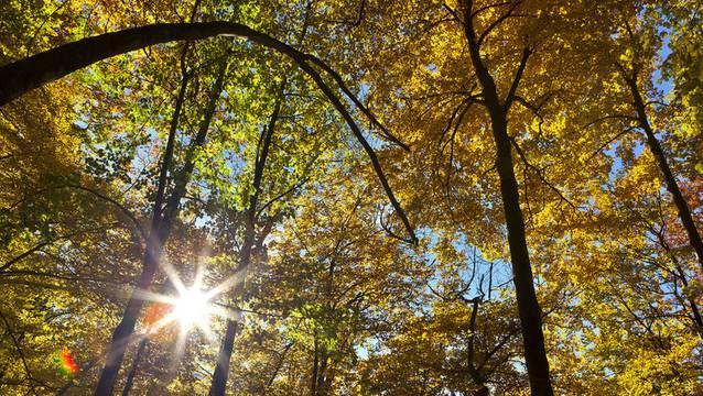 Am 21. März 2019 ist internationaler Tag des Waldes.