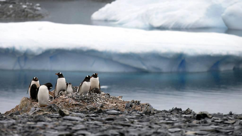 Anstieg des Meeresspiegels wurde bisher unterschätzt