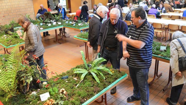 Die Pilzausstellung in Zwingen war gut besucht.