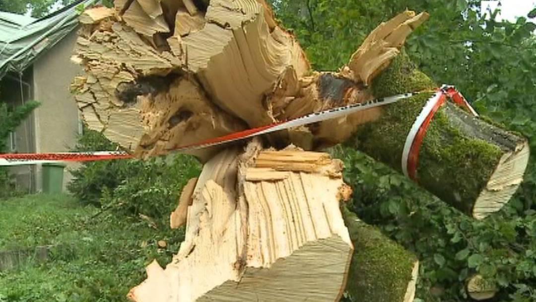 Heftiges Gewitter liess Bäume umstürzen - ein Toter
