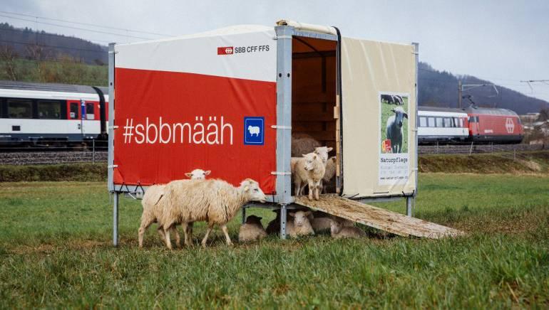 Schafe sorgen nun für die Pflege der Wiesen neben den Schweizer Bahngleisen. Diese sind zwar nicht leiser als die herkömmlichen Maschinen, aber umweltfreundlicher.