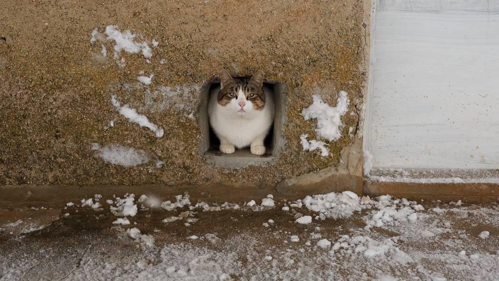 Die Katze wurde im leeren Büro eingeschlossen.