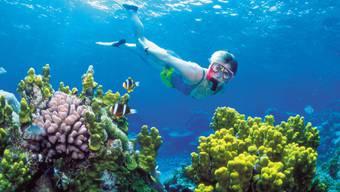 Eine Frau im farbenprächtigen Great Barrier Reef (Archiv)