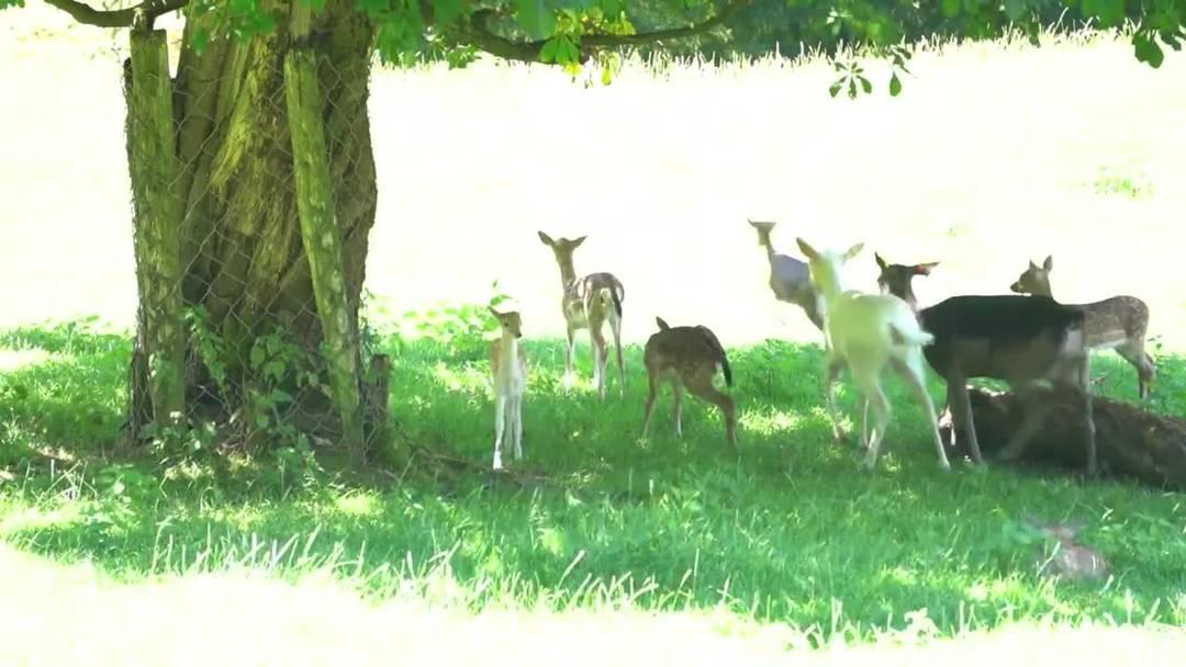 Zwei Minuten Jöö: Der Tierpark Roggenhausen hat zahlreichen Nachwuchs bekommen