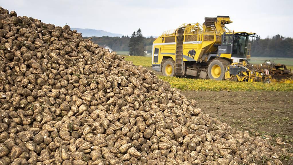 Der Nationalrat will die Schweizer Zuckerproduktion mit gesetzlichen Massnahmen stützen. Im Bild Ernte von Zuckerrüben. (Archivbild)